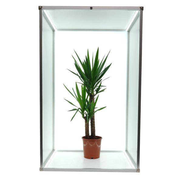 12098B frame flora B 1200x1200 1