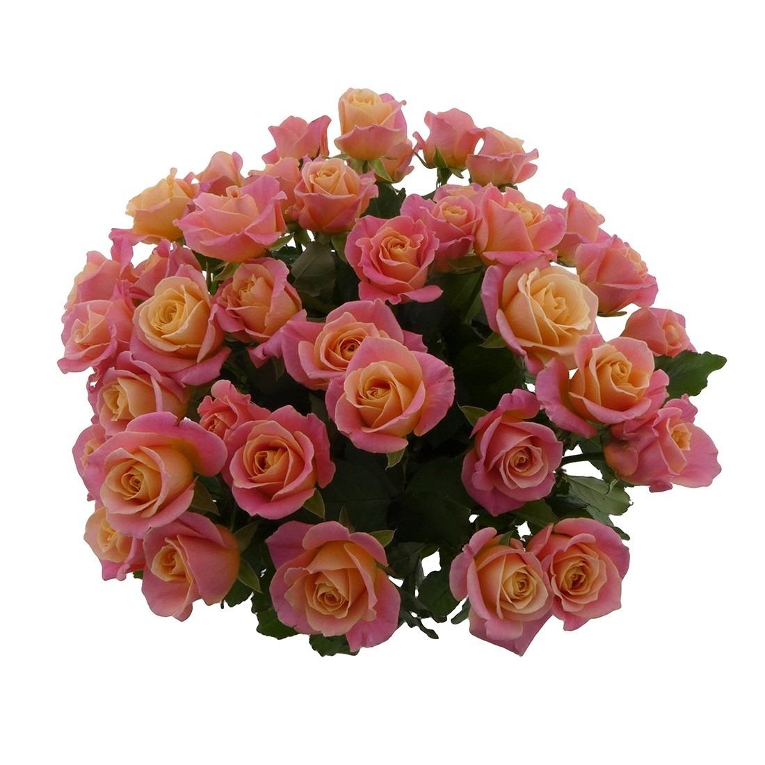 rozen bos 1100x1100